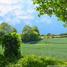 Felder als Nachbarn